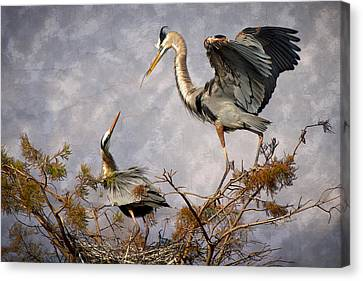 Great Blue Heron Canvas Print - Nesting Time by Debra and Dave Vanderlaan