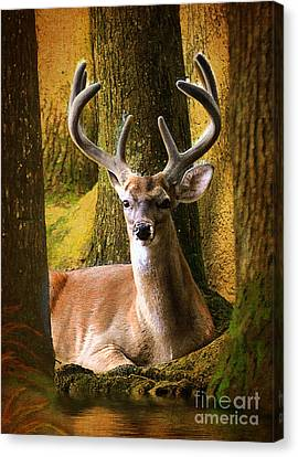 Canvas Print featuring the photograph Nestled In The Woods by Kathy Baccari