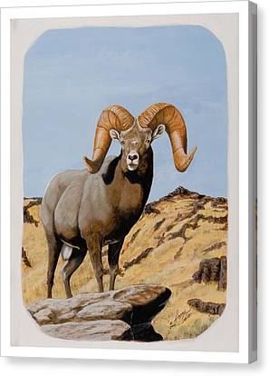 Nevada California Bighorn Canvas Print