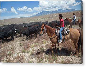Nevada Cowgirls Herding Cattle Canvas Print by Jim West