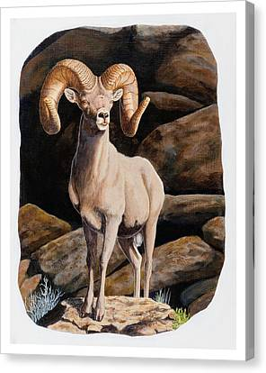 Nevada Desert Bighorn Canvas Print