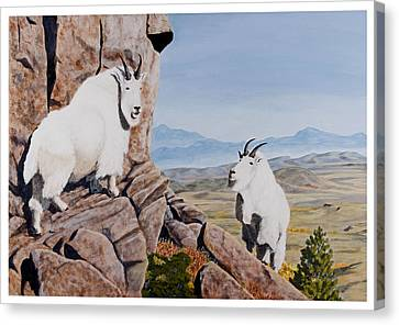 Nevada Mountain Goats Canvas Print