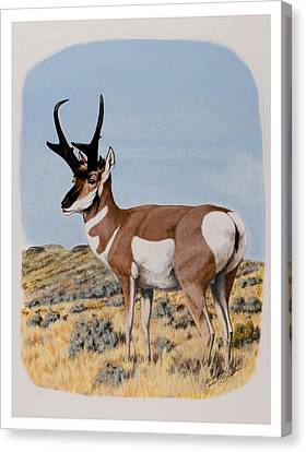 Nevada Pronghorn  Canvas Print
