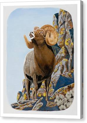 Nevada Rocky Mountain Bighorn Canvas Print