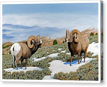 Nevada Rocky Mountain Bighorns Canvas Print