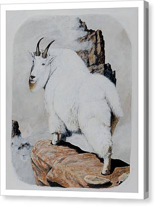 Nevada Rocky Mountain Goat Canvas Print
