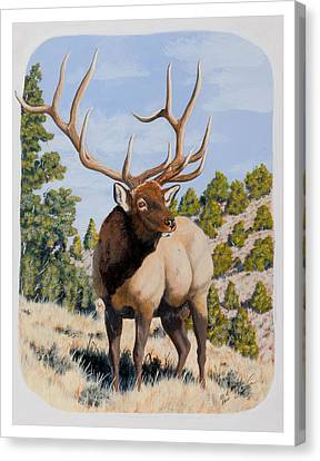Nevada Typical Elk Canvas Print