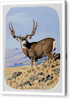 Nevada Typical Mule Deer Canvas Print