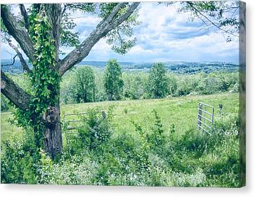 Never Ending Fields Canvas Print by Karol Livote