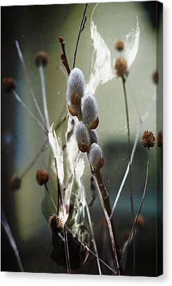 Canvas Print featuring the photograph New Beginnings And Fairytales by Rebecca Sherman
