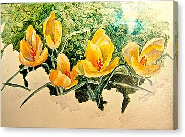 New Beginnings Canvas Print by Carolyn Rosenberger