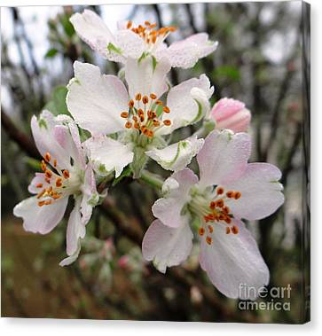 Canvas Print featuring the photograph New Beginnings by Ecinja Art Works