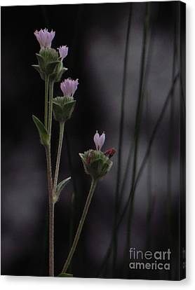 Canvas Print featuring the photograph New Beginnings by Joy Hardee