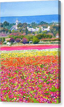 West Coast Canvas Print - New Carlsbad Flower Fields by Mary Helmreich