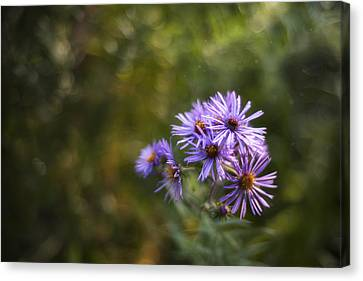 Depth Of Field Canvas Print - New England Asters by Scott Norris