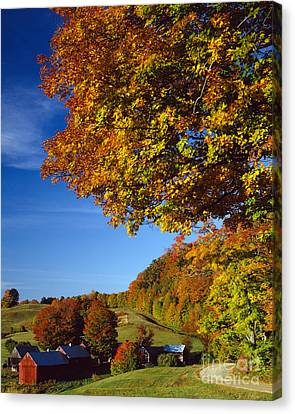 New England Autumn Canvas Print by Rafael Macia