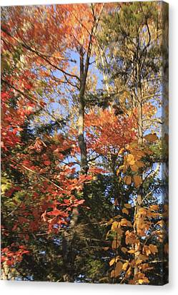 New England Trees Canvas Print
