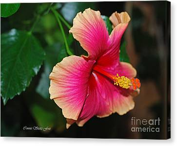 New Every Morning - Hibiscus Canvas Print