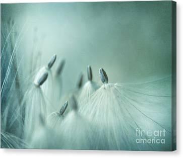 New Generation Canvas Print by Priska Wettstein