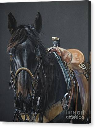 Reins Canvas Print - New Guy On The Job by Joni Beinborn