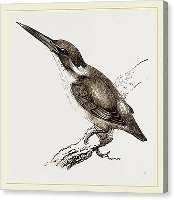 New Holland Kingfisher Canvas Print by Litz Collection