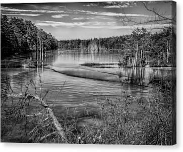 New Jersey Pinelands Canvas Print by Louis Dallara