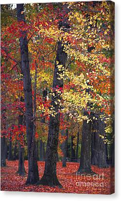 Autumn Leaf Canvas Print - New Jersey's Reds by Marco Crupi