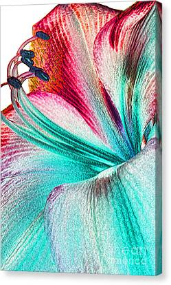 Canvas Print featuring the digital art New Kid In Town by Margie Chapman
