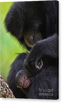 New Life Canvas Print by Ashley Vincent