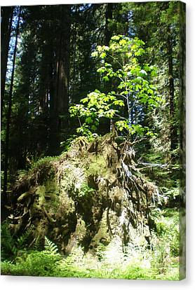 Canvas Print featuring the photograph New Life For Old Stump by Suzanne McKay