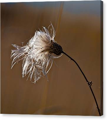 New Life Is Comming Canvas Print by Leif Sohlman
