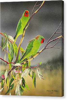 New Life - Little Lorikeets Canvas Print by Frances McMahon