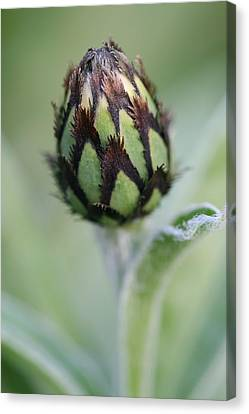 New Life Canvas Print by Mark Severn