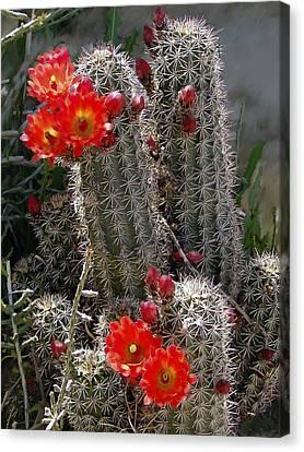 New Mexico Cactus Canvas Print by Kurt Van Wagner