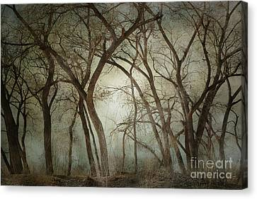New Mexico Winter Woodland Canvas Print by Andrea Hazel Ihlefeld