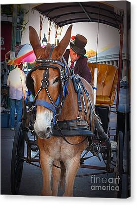 New Orleans Mule Carraige Canvas Print by Jeanne  Woods