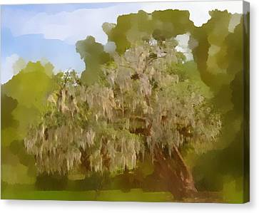 Cypress Canvas Print - New Orleans Spanish Moss On Live Oaks by Christine Till