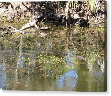 New Orleans - Swamp Boat Ride - 121251 Canvas Print by DC Photographer
