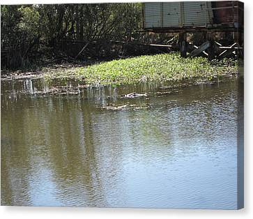 New Orleans - Swamp Boat Ride - 121274 Canvas Print by DC Photographer