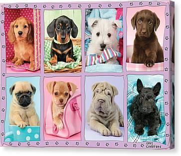 New Puppy Multipic Canvas Print by Greg Cuddiford