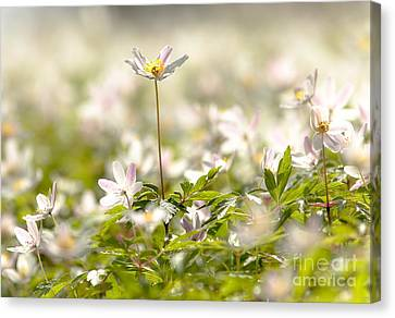 Canvas Print featuring the photograph New Time Springtime by Rose-Maries Pictures