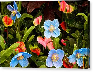 New World And Old World Exotic Flowers Canvas Print by Byron Varvarigos
