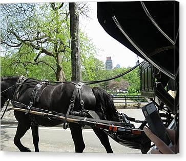 New York City - Central Park - 12122 Canvas Print by DC Photographer