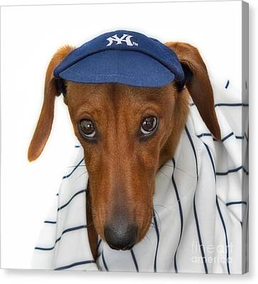 New York Yankee Hotdog Canvas Print by Susan Candelario