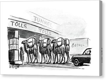Camel Canvas Print - New Yorker April 6th, 1987 by Warren Miller