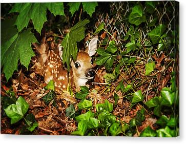 Canvas Print featuring the photograph Newborn Fawn  by Eleanor Abramson