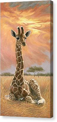 Newborn Giraffe Canvas Print by Lucie Bilodeau