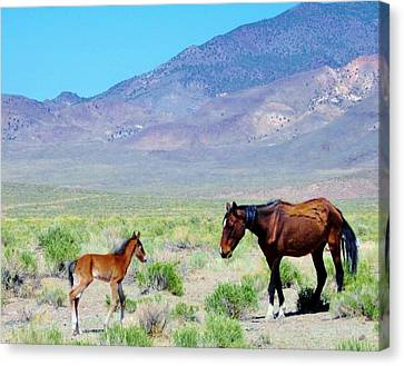 Canvas Print featuring the photograph Newborn Mustang Foal by Marilyn Diaz