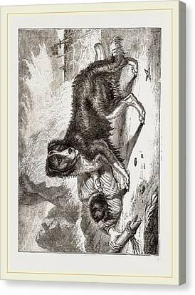 Newfoundland Dog Canvas Print by Litz Collection