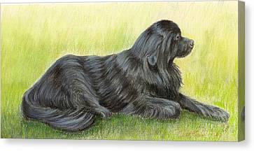 Newfoundland Dog Canvas Print by Ruth Seal